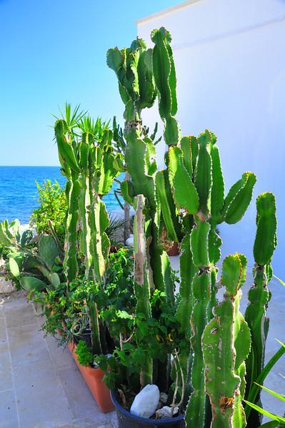 Monopoli cactus garden