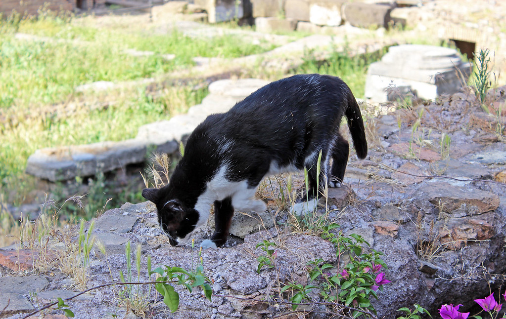 Roman cats living at ancient ruins