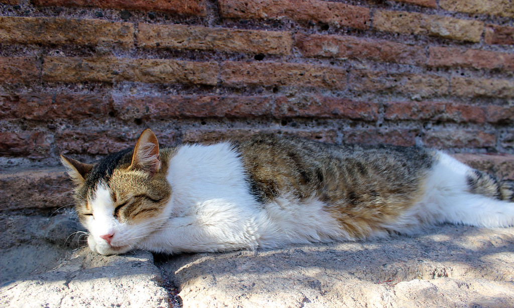 Torre Argentina - feral cats in Rome