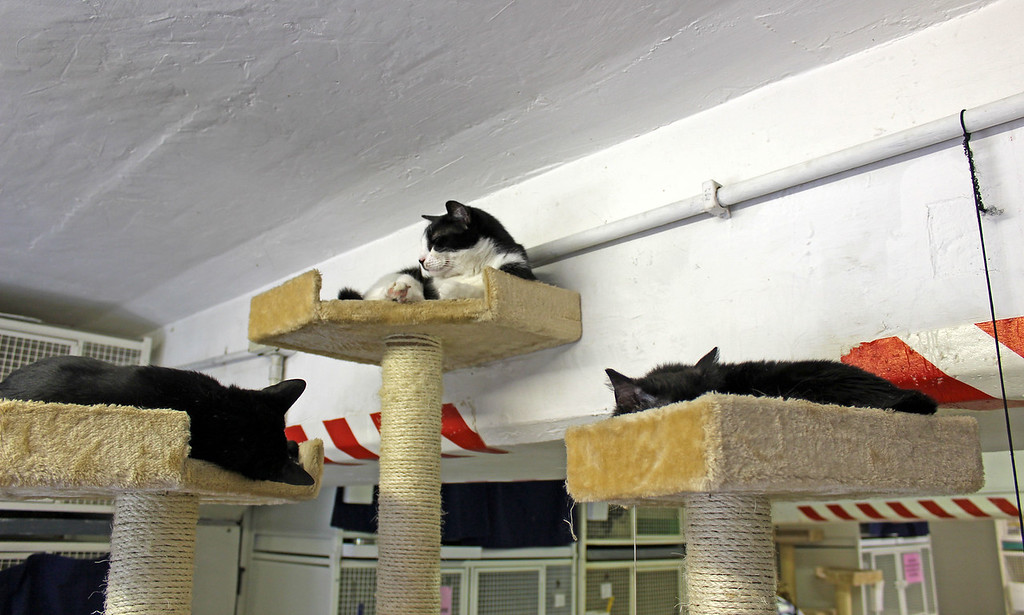 Roman cat sanctuary - cats with special needs