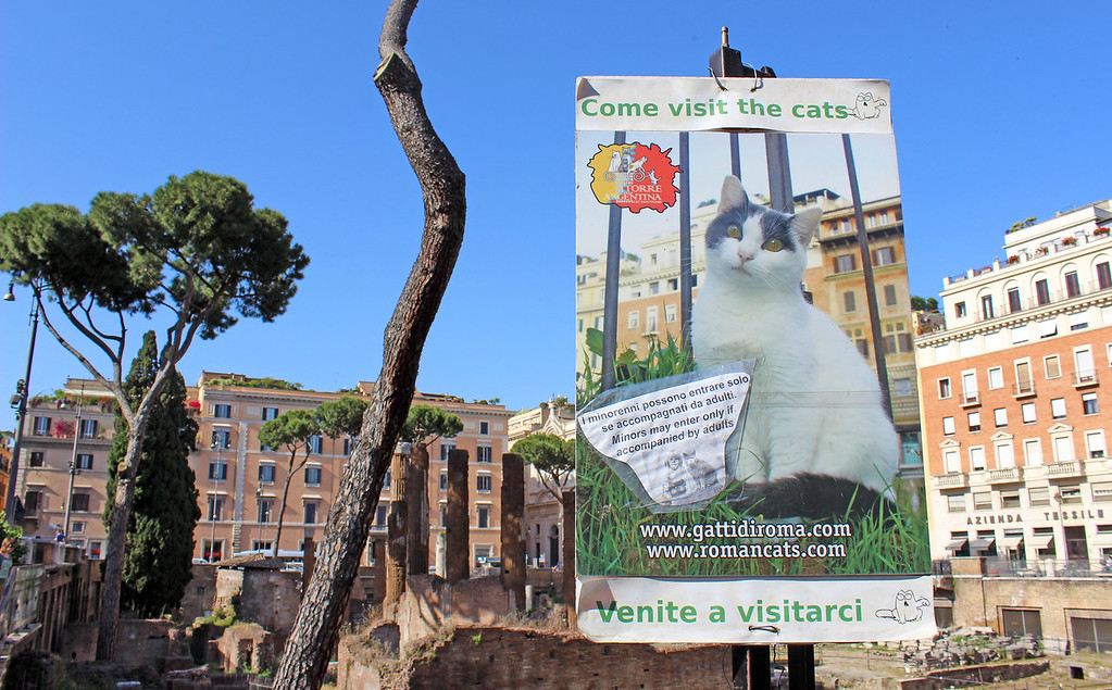 Visiting Largo di Torre Argentina cat sanctuary