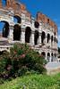 The Roman Colesium in Rome, Italy.