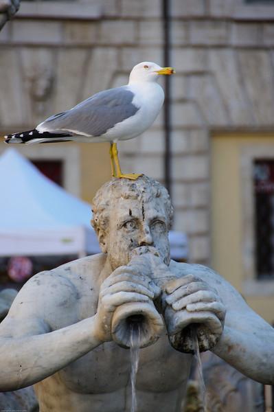Piazza Navona: Fountain of Neptune
