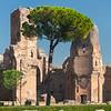 Pine of Rome