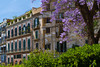 Historic building architecture with the Blue Jacaranda tree in Palermo, Sicily, Italy.
