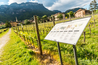Suedtirol-Sueden-Weinstrasse-Kaltern-Ansichten_9764