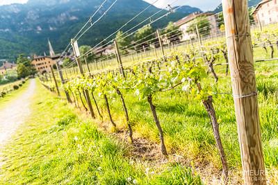 Suedtirol-Sueden-Weinstrasse-Kaltern-Ansichten_9763