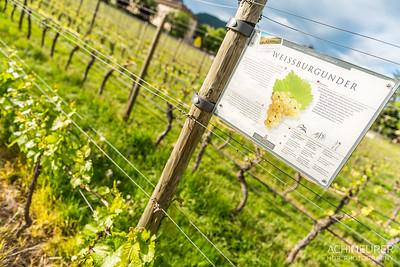 Suedtirol-Sueden-Weinstrasse-Kaltern-Ansichten_9765