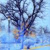 """""""Winter Evening"""" - Via Lago di Lesina - Villa Adriana - Tivoli"""