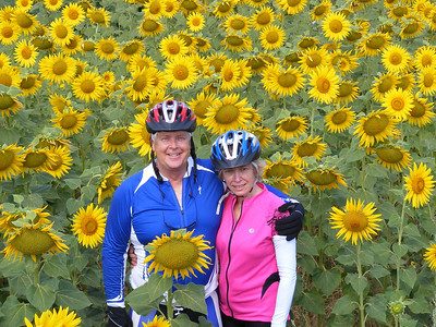 more in-laws in sunflowers
