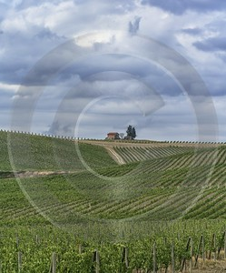Castellina In Chianti Tuscany Winery Panoramic Viepoint Lookout Fine Art Photography Gallery - 022807 - 15-09-2017 - 7891x9512 Pixel