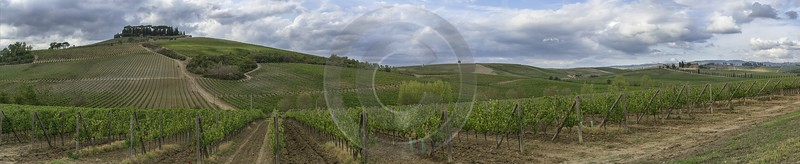 Castellina In Chianti Tuscany Winery Panoramic Viepoint Lookout Fine Art Photography Gallery Animal - 022730 - 15-09-2017 - 39013x7531 Pixel