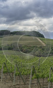 Castellina In Chianti Tuscany Winery Panoramic Viepoint Lookout Modern Art Prints - 022806 - 15-09-2017 - 7868x13073 Pixel