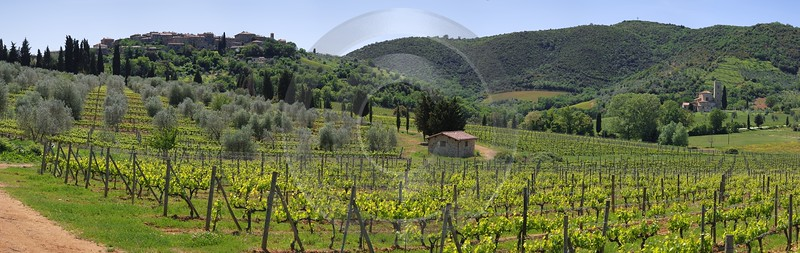 Castelnuovo Dell Abate Tuscany Italy Toscana Italien Winery Pass Stock Photos Tree Nature Rock - 013019 - 17-05-2012 - 12888x4084 Pixel