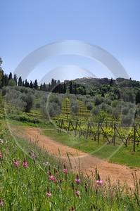 Castelnuovo Dell Abate Tuscany Italy Toscana Italien Winery Photography Prints For Sale - 013018 - 17-05-2012 - 4037x6082 Pixel