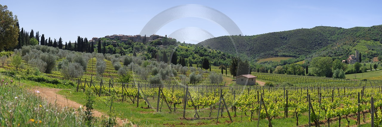 Castelnuovo Dell Abate Tuscany Italy Toscana Italien Winery Animal Stock Pictures Summer Shoreline - 013017 - 17-05-2012 - 12377x4115 Pixel