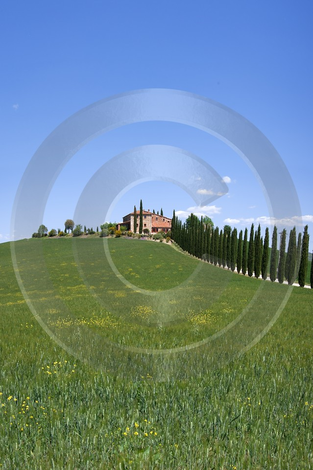Castiglione Orcia Hill Huegel Tuscany Italy Toscana Italien Photography Prints For Sale Leave - 013008 - 17-05-2012 - 4021x6036 Pixel