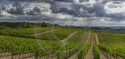 Lilliano Chianti Tuscany Winery Panoramic Viepoint Lookout Hill Fog Animal Autumn Fine Art Posters - 022817 - 15-09-2017 - 16119x7702 Pixel