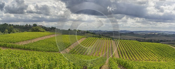 Lilliano Chianti Tuscany Winery Panoramic Viepoint Lookout Hill Art Printing Grass Winter Sky - 022819 - 15-09-2017 - 23521x9308 Pixel