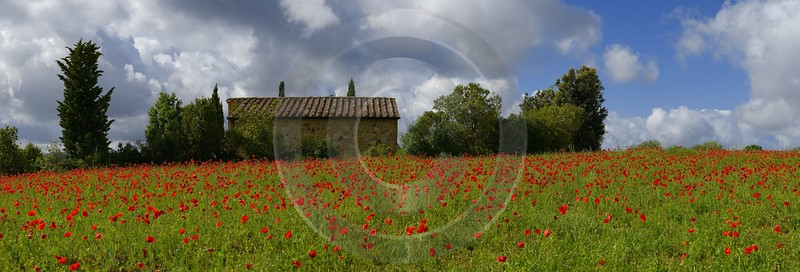 Montefollonico Tuscany Italy Toscana Italien Spring Fruehling Poppy Fine Art Photography For Sale - 014064 - 20-05-2013 - 19866x6743 Pixel