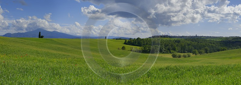 Pienza Tuscany Italy Toscana Italien Spring Fruehling Scenic Grass Pass Forest Landscape - 014084 - 20-05-2013 - 20971x7378 Pixel