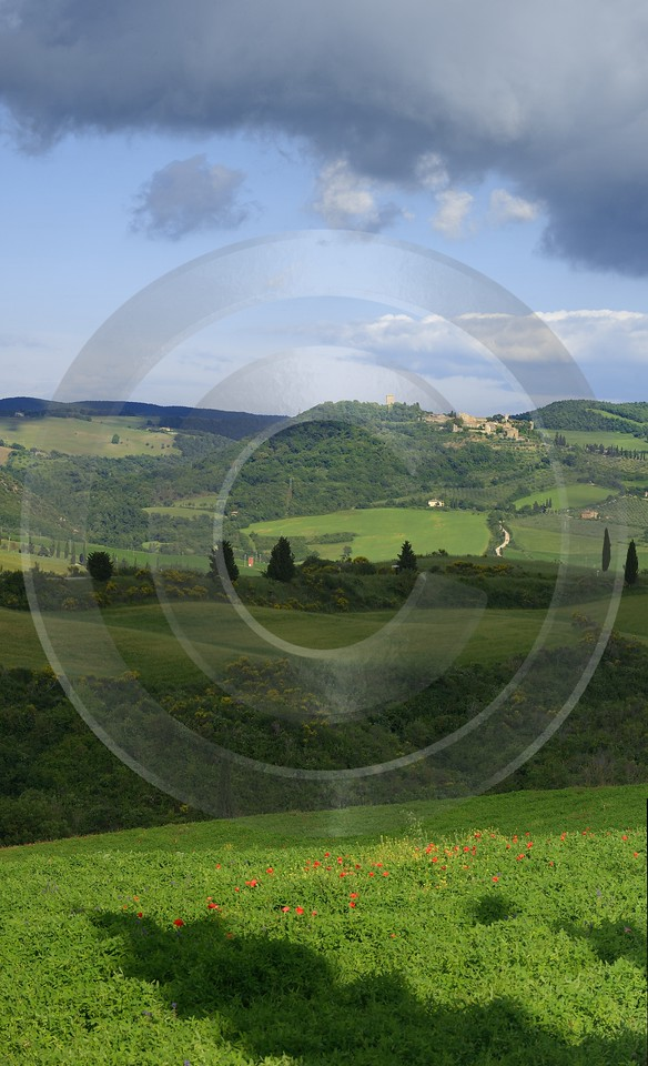 Pienza Tuscany Italy Toscana Italien Spring Fruehling Scenic Prints For Sale Grass Image Stock - 013136 - 23-05-2013 - 7127x11718 Pixel