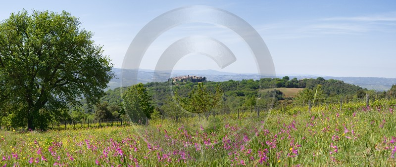 Sant Angelo Colle Tuscany Italy Toscana Italien Spring Fine Art Photography For Sale - 012578 - 18-05-2012 - 12015x5069 Pixel