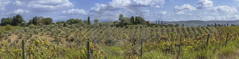 Santa Cristina In Salivolpe Tuscany Winery Panoramic Viepoint Fine Art Posters Sky Stock Images - 022873 - 12-09-2017 - 31267x7831 Pixel
