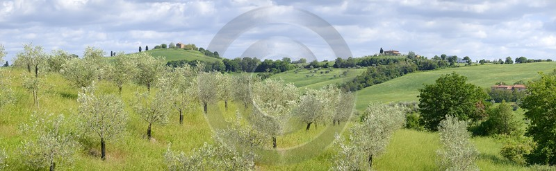 Torrita Di Siena Tuscany Italy Toscana Italien Spring Sale View Point Sunshine Leave Stock Images - 012942 - 14-05-2012 - 15225x4691 Pixel