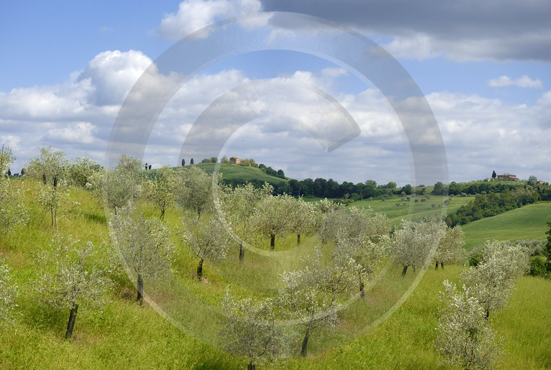 Torrita Di Siena Tuscany Italy Toscana Italien Spring Photography Prints For Sale Panoramic Shore - 012935 - 14-05-2012 - 8706x5841 Pixel
