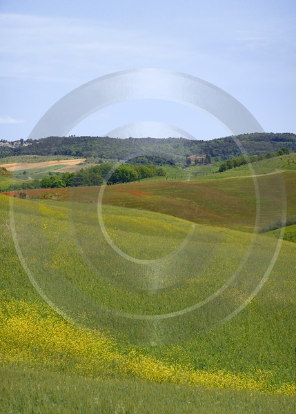 Trequanda Tuscany Italy Toscana Italien Spring Fruehling Scenic Art Photography For Sale - 012766 - 18-05-2012 - 4847x6772 Pixel
