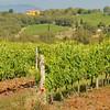 Bucine Vineyard in Tuscany