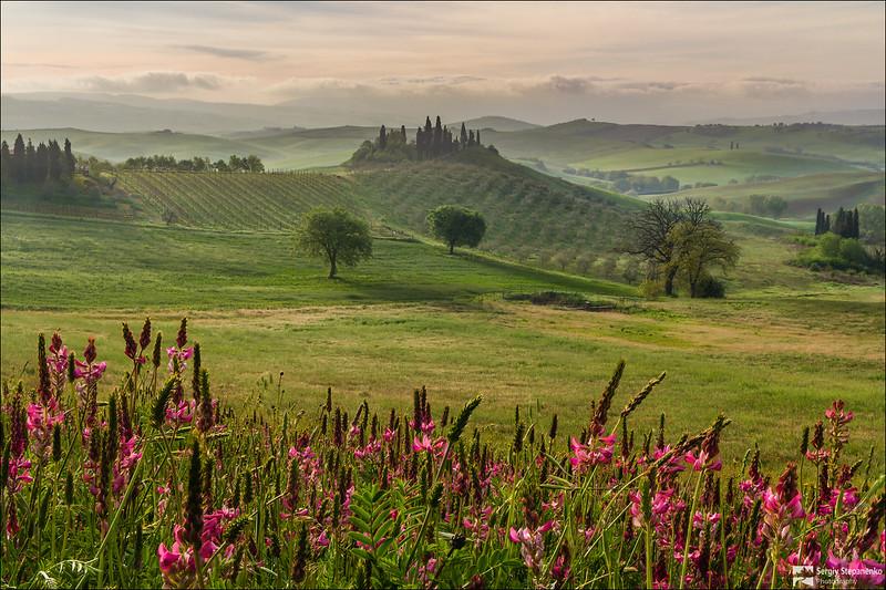 Tuscan Flowers | Цветочки Тосканы