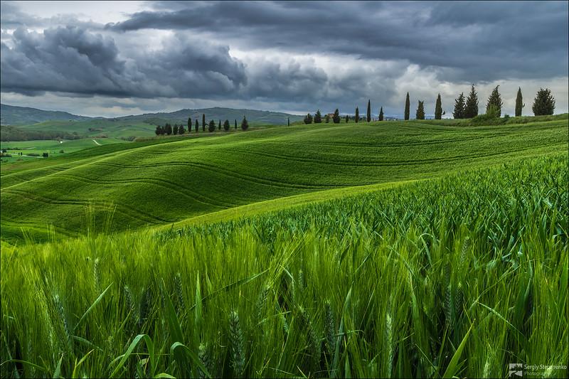 Among Tuscany Fields   В полях Тосканы