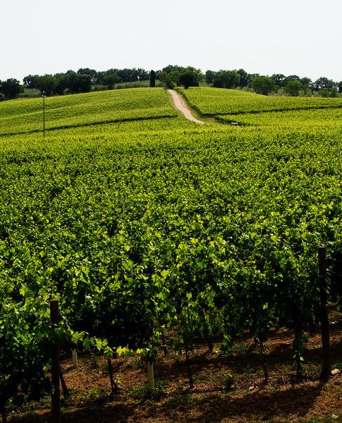 The vineyards of Arnaldo Caprai