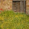 Civita di Bagnoregio Garden
