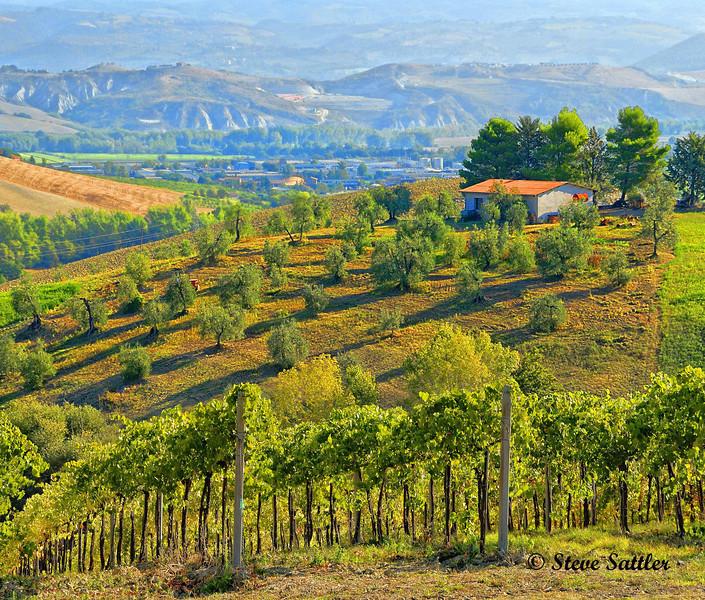 Vineyard Outside of Orvieto