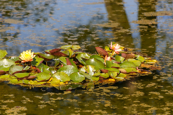 Parco Giardino Sigurtà - The Water Gardens