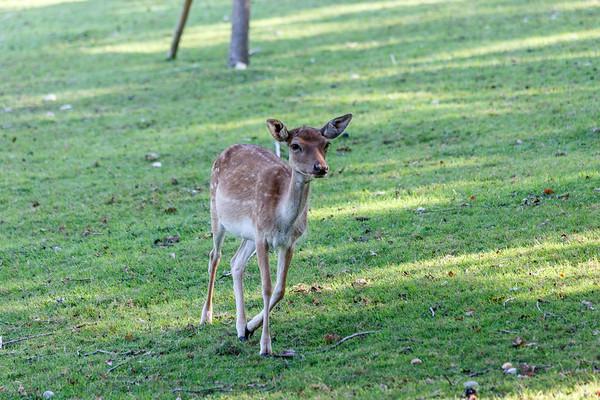 Parco Giardino Sigurtà - The Fallow Deer Valley