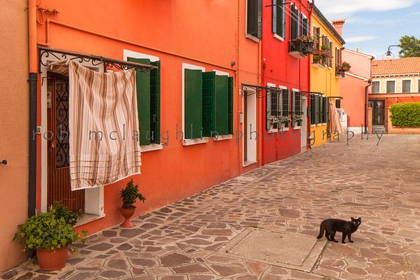 Black Cat of Burano, Burano, Veneto