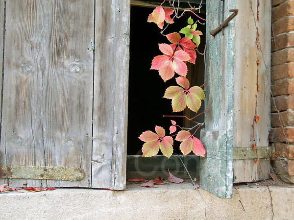 Old Shutters and Leaves, Venice, Italy
