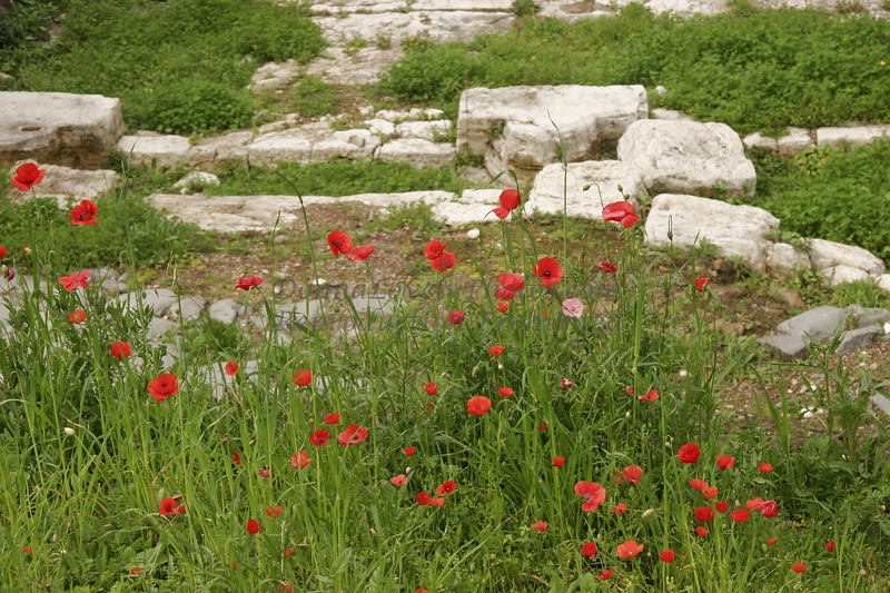 Roman Ruins with Poppies, Italy