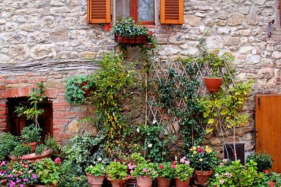 Fiore Montefollonico