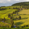 Winding Road lined with Cypress Trees, Monticchiello, Tuscany