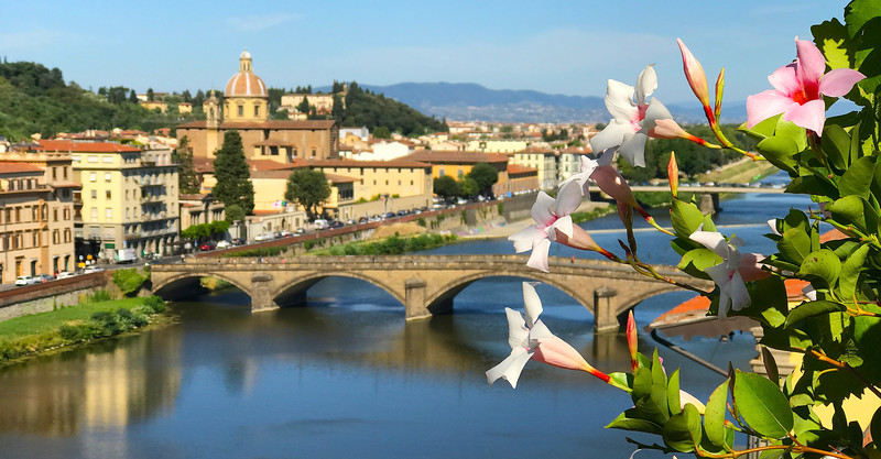 Flowers above the Arno River. 2017.