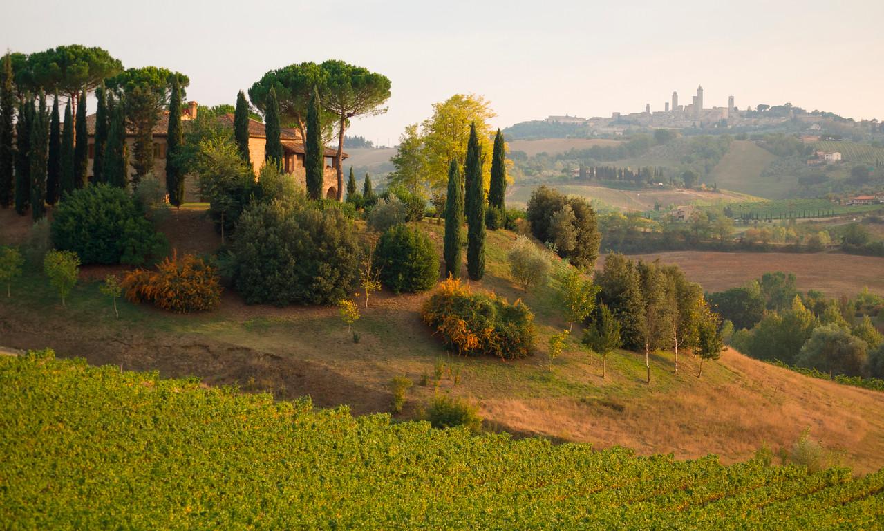 Vineyard  near San Gimignano, Tuscany