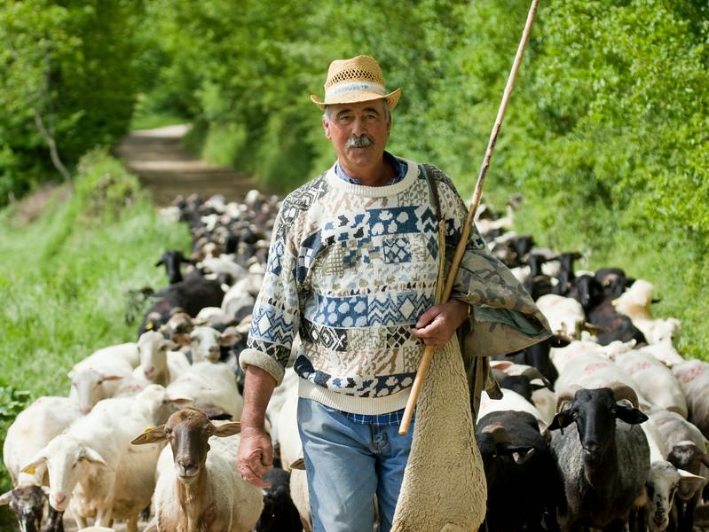 Italian Shepherd in Umbria