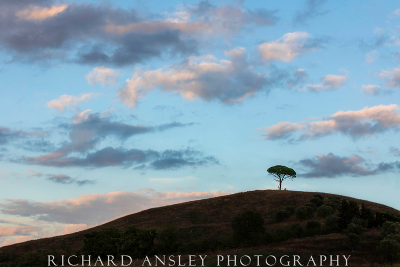 Left Alone-Hilltop Tree, Tuscany