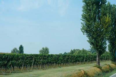 Padua Vineyard