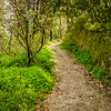 Trail to Montecatini Alto